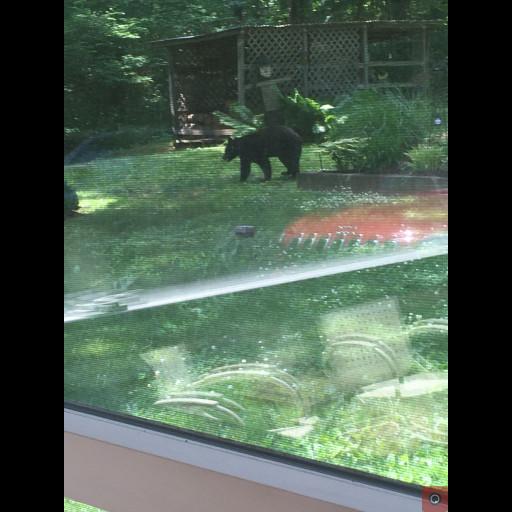 Rolling Hills bear