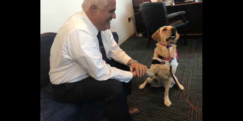 Image for Daisey the Courthouse Comfort Dog